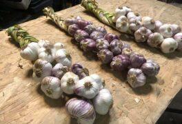 Česnek z Třebíčska provoní novoměstské farmářské trhy